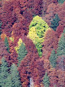 'Herbstwald' von art-dellas