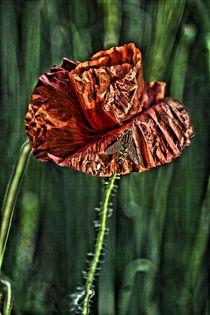 poppy by frakn