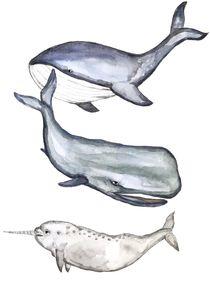 Wale  von Ines Hennig