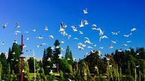 Birds von Airton Pires Junior