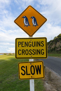 Penguins Crossing Road Sign by globusbummler