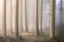 Into the Mist by Chris Frost