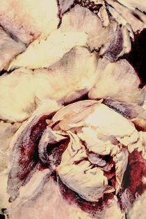 Blumenmalerei - Pfingstrosenmakro by Chris Berger