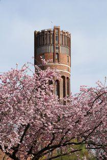 Japanische Zierkirsche trifft Lüneburger Wasserturm von Anja  Bagunk
