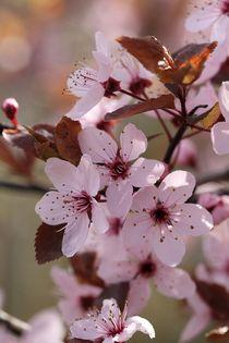 Frühlingszauber in rosa von Anja  Bagunk