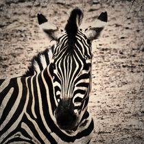 Retro Zebra 2 von kattobello