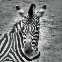 Retro Zebra von kattobello