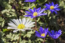 Flowers 051217 von Mario Fichtner