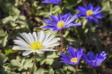 Flowers-051217