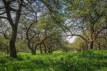'Frühling im Obstgarten' von Christine Horn
