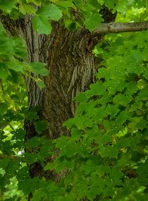 tree trunk 4 by Tim Seward