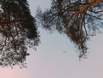 Flight over... by Andrei Grigorev