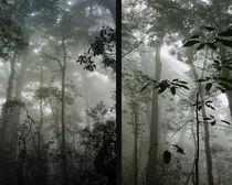 Im tropischen Nebelwald by Hartmut Binder