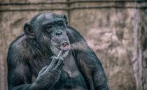 Rauchender Affe von Stefan Mosert