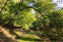 Im Sommer durch den Wald von Ronald Nickel