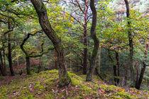 Regentag im Wald von Ronald Nickel