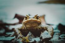 Common toad  von tr-design