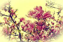 Sonnige Magnolien von Claudia Evans