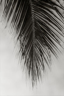 Palm Leaf von oliverp-art