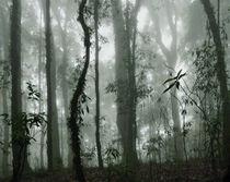 Im tropischen Nebelwald 2 by Hartmut Binder