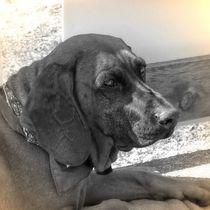 Nostalgie Gebirgsschweißhund von kattobello