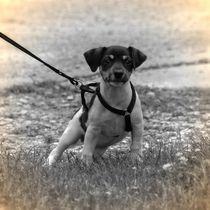 Nostalgie Jack Russel Terrier Welpe von kattobello