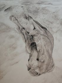 Pferd in voller Bewegung by Helmut Hackl