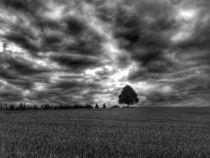Tree drama by Sheona Hamilton-Grant
