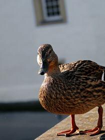 eine Ente von Wladimir Zarew