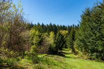Der Weg als grünes Band im Wald von Ronald Nickel
