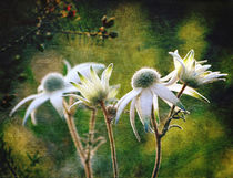 Vintage Flannel Flowers by Karen Black