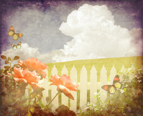 Vintage-rose-picket-fence-background-butterflies-a18