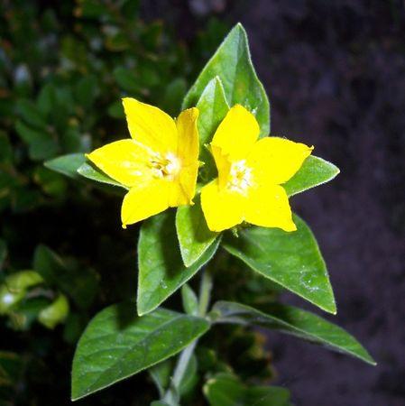 Blumen-058a