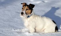 Jonny im schnee von Edmond Marinkovic