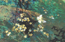 The Butterfly Pond von Karen Black