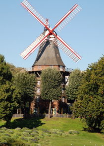 Windmühle wallanlagen 4 von Edmond Marinkovic