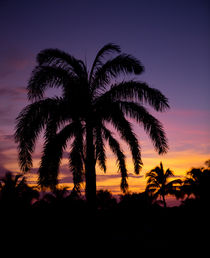 Carribbean sunset with palm by Bastian Linder