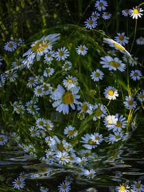 'Flower ball - daisies in Water' von Chris Berger