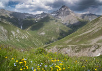 Mountains  in the Alps with flowers and clouds at Fimba pass by Bastian Linder