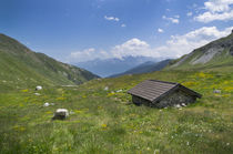 Mountain landscape in the Alps with flowers at Pforzheimer Hut, Austria von Bastian Linder