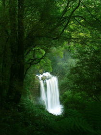 Waterfall in Rainforest, Victoria by Bastian Linder