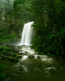 Waterfall in Rainforest, Victoria, Otway National Park, Australia by Bastian Linder