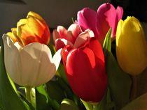 Tulpen mit Licht und Schatten von assy