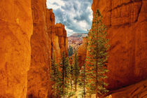 USA - Bryce Canyon von Chris Berger