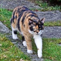 Glückskatze on Tour by kattobello
