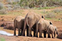 Elefanten-Familie am Wasserloch, Südafrika by assy
