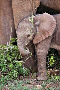 Elefantenkind von assy