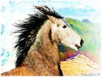 Young Spirited Andalusian by Sandra  Vollmann