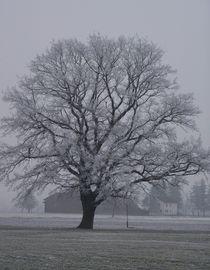 Lindenbaum im Winter by art-dellas