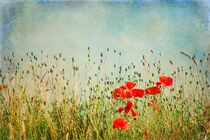 My Summer Dream by AD DESIGN Photo + PhotoArt